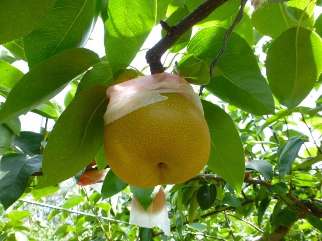なし,梨,合わせ酢
