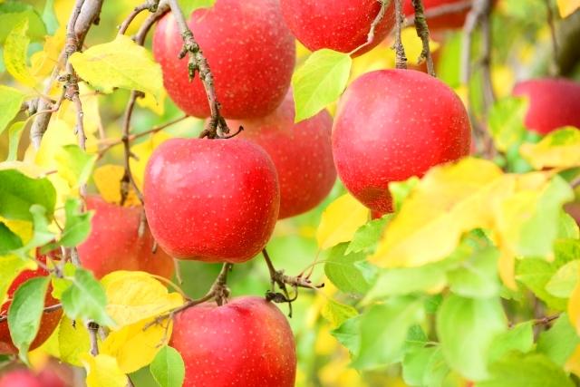 りんご,林檎,合わせ酢