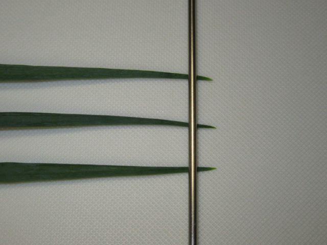 青ねぎや分葱の下処理方法と手順