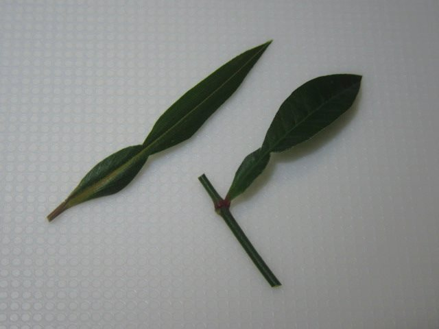 柚子の葉の切り方,笹の葉と南天の葉の切り方例
