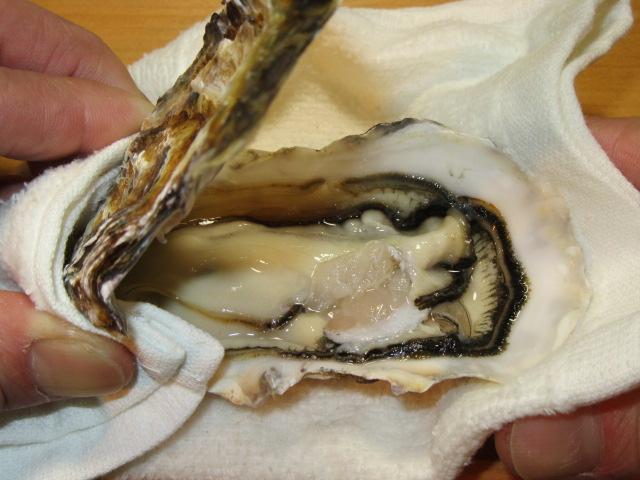 かきのからむき方法,牡蠣の殻を開けるところ