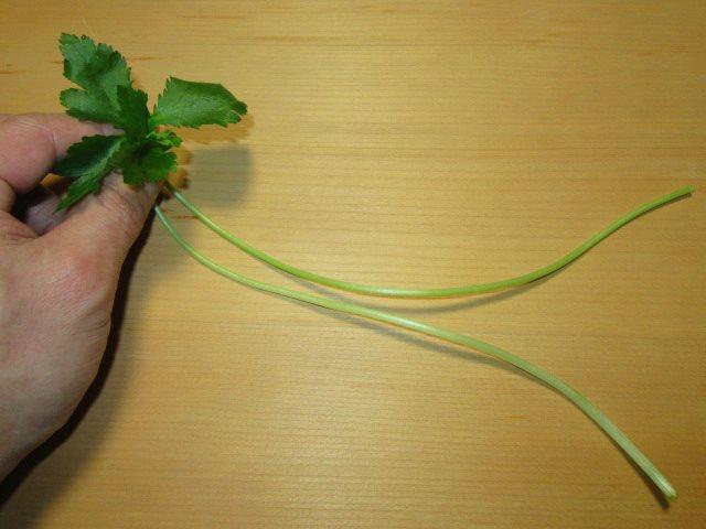 天婦羅や椀ものに使える束ね三つ葉の作り方