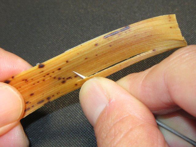 竹の皮の使い方