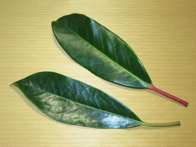 ゆずり葉,正月の飾りつけ,かいしき